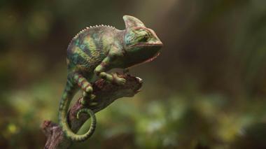 """Projekt """"Colorchanging Chameleon"""" von Marius Pörsel"""