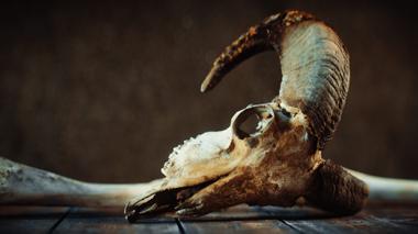"Projekt ""Skull"" von Fabian Scholer"
