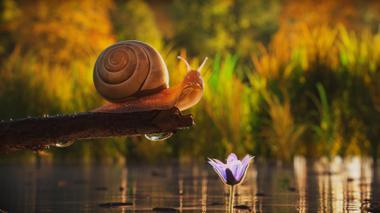 "Projekt ""The Snail"" von Daniel Paul"